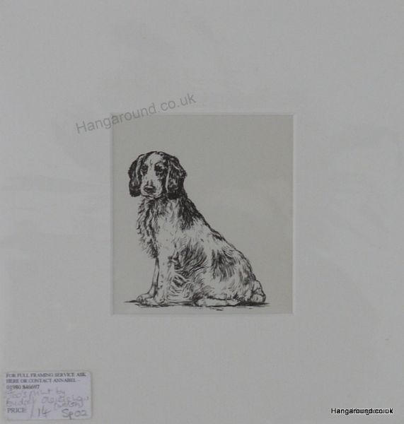 Welsh Springer Spaniel  - sitting  1960's print by Bridget Olerenshaw